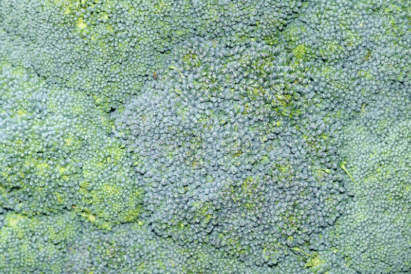 Download Blossom bud stock photo. Image of brassica, vegetable - 27065600