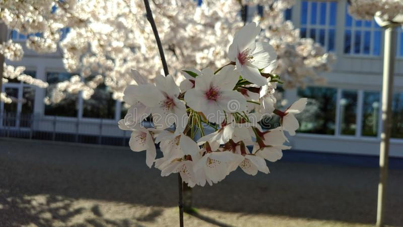 blossom stock images