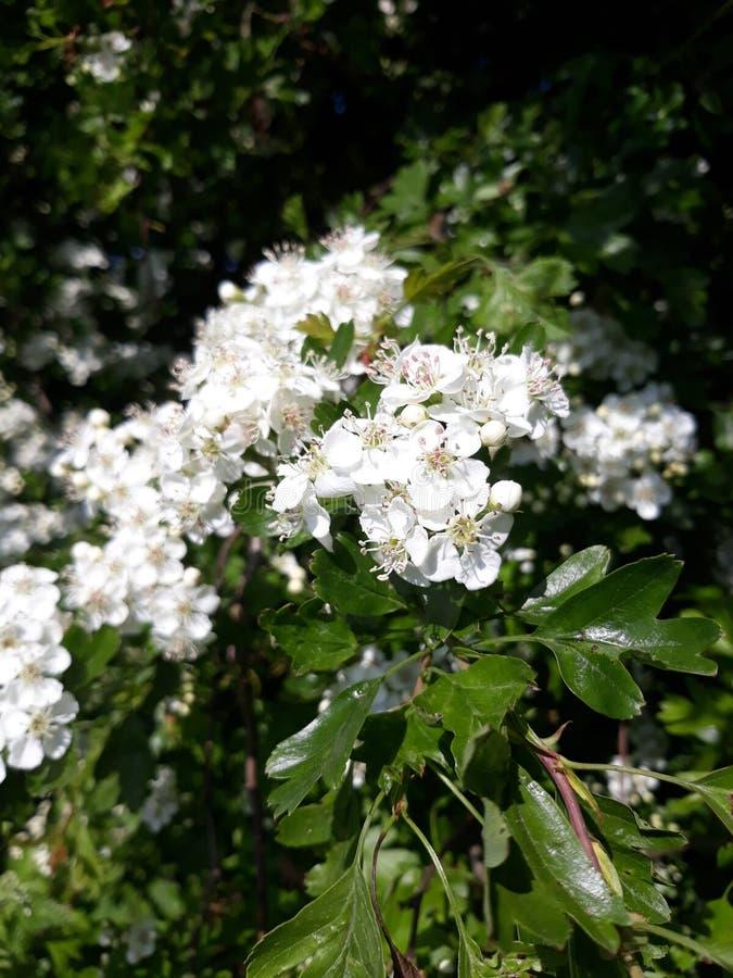 Blossom stock image