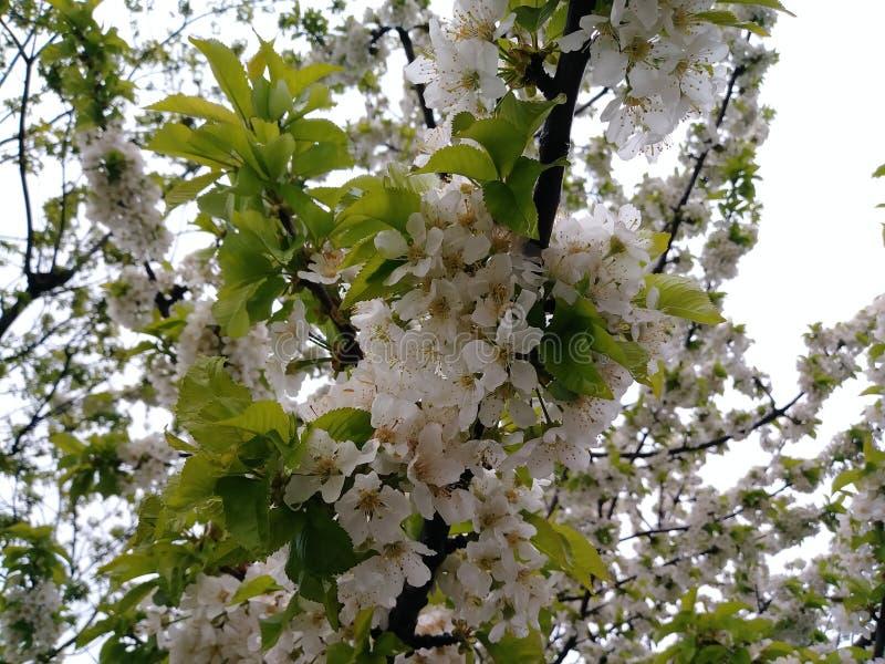 Blossom stock foto's