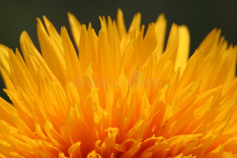 Blossom fire royalty free stock photography