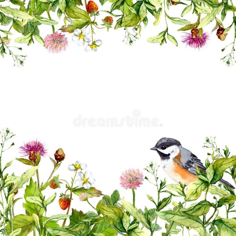 Blossom flowers, wild grass, spring herbs, bird. Floral card. Watercolor. Blossom flowers, wild grass, spring herbs and bird. Floral border pattern for card or vector illustration