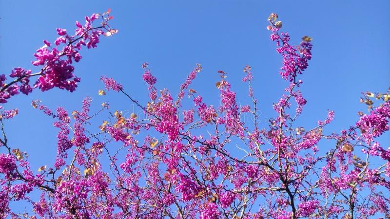 Blossom, Pink, Branch, Purple stock photos