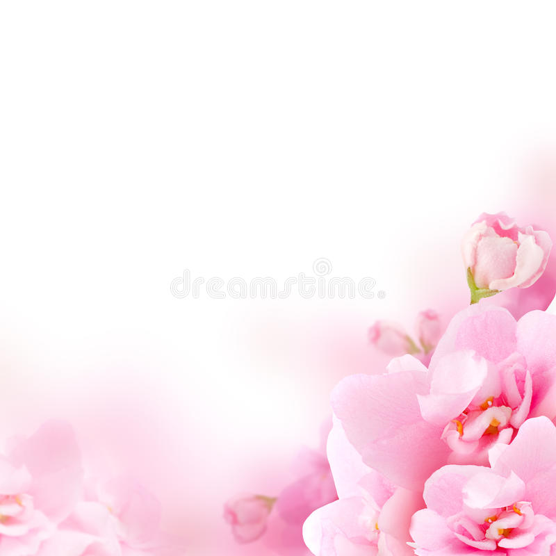 Free Blossom - Pink Flower, Floral Background Royalty Free Stock Image - 28757246