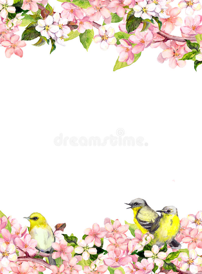 Blossom pink sakura flowers and song birds. Floral card or blank. Watercolor. Blossom of pink sakura flowers and song birds. Floral card or blank. Watercolor royalty free illustration