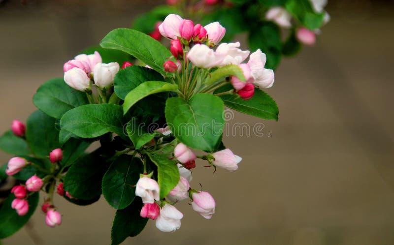 Blossom, Plant, Branch, Flower Free Public Domain Cc0 Image