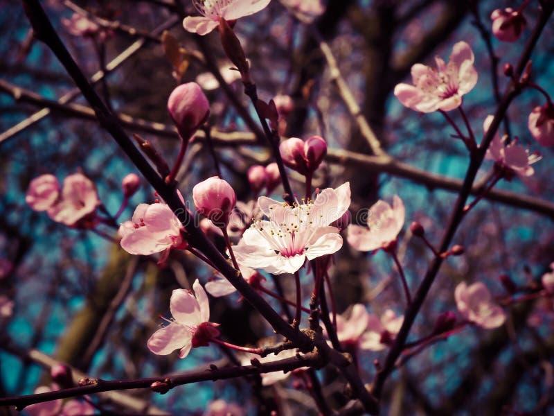 Blossom, Plant, Pink, Branch Free Public Domain Cc0 Image