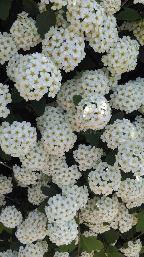 blossom' s tijd royalty-vrije stock afbeeldingen