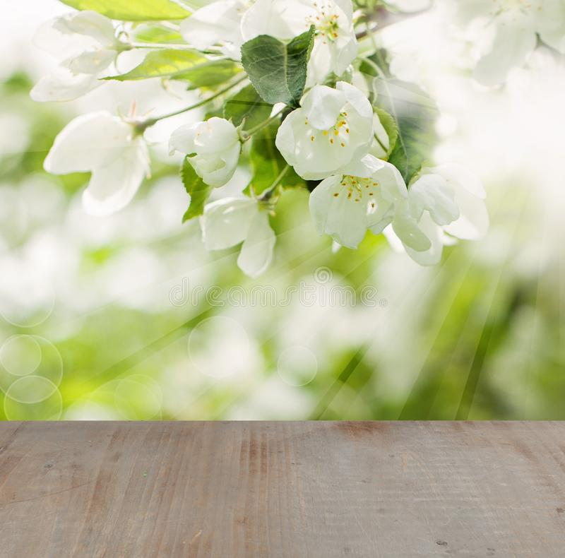 Blossom Spring Background with Flowers, Green Leaves stock images