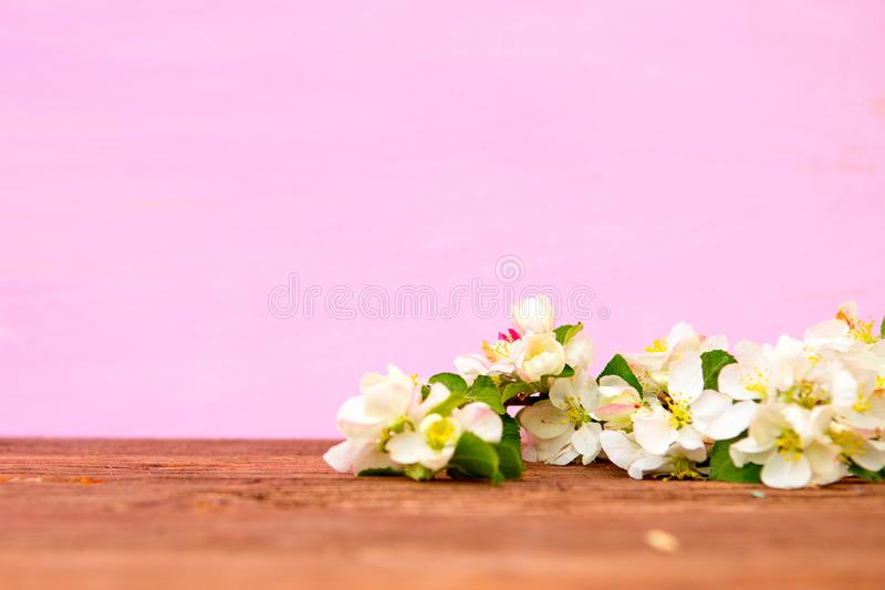 Blossom spring flowers of apple on pink wooden background stock photography