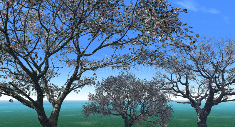 Blossom_Three royalty free illustration