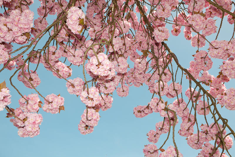 Blossom Time Royalty Free Stock Image