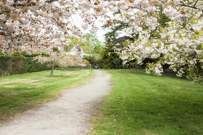 Blossom tree branches above the small walk way. Romantic blossoming branches above the small path way in spring close up stock photo