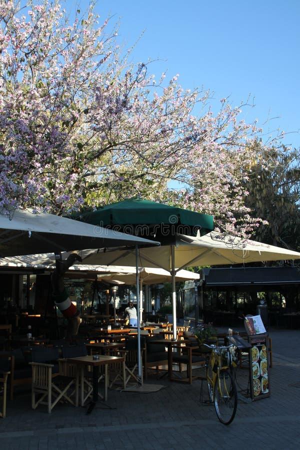Spring in Crete island royalty free stock photos