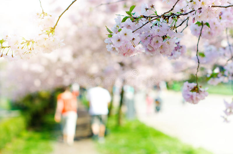 Blossom trees and flowers in a park. Beautiful spring nature view with people. Trees and sunlight. Scene of sunny day. Natural bac. Kground stock image