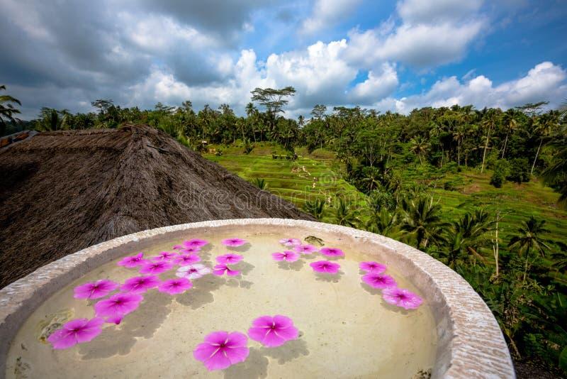 Blossome Schwimmen der rosa Blume in Steinschüssel stockfotos