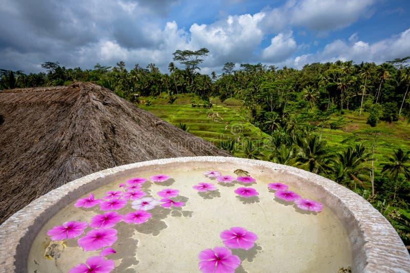 Blossome Schwimmen der rosa Blume in Steinschüssel stockfotografie