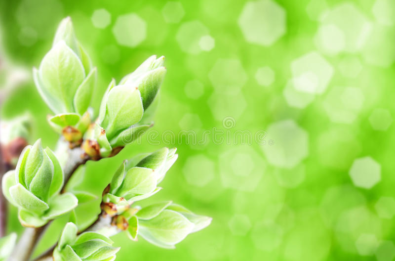 Blossomed buds. Abstract natural backgrounds with blured bokeh stock photos