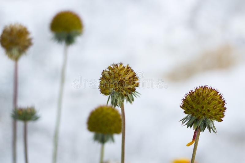 Blossomed flowers. A closeup photo of blossomed flowers royalty free stock photo