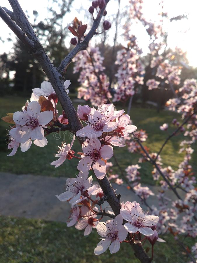 Blossomed tree. By the road stock photo