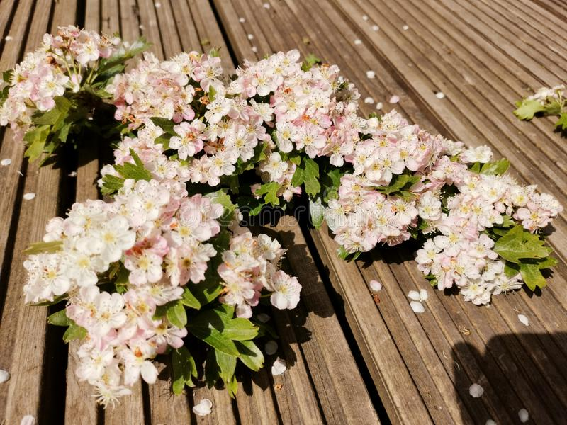 Blossomed trees. Flowers new life royalty free stock image