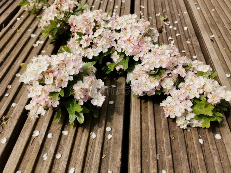 Blossomed trees. Flowers new life start spring royalty free stock image