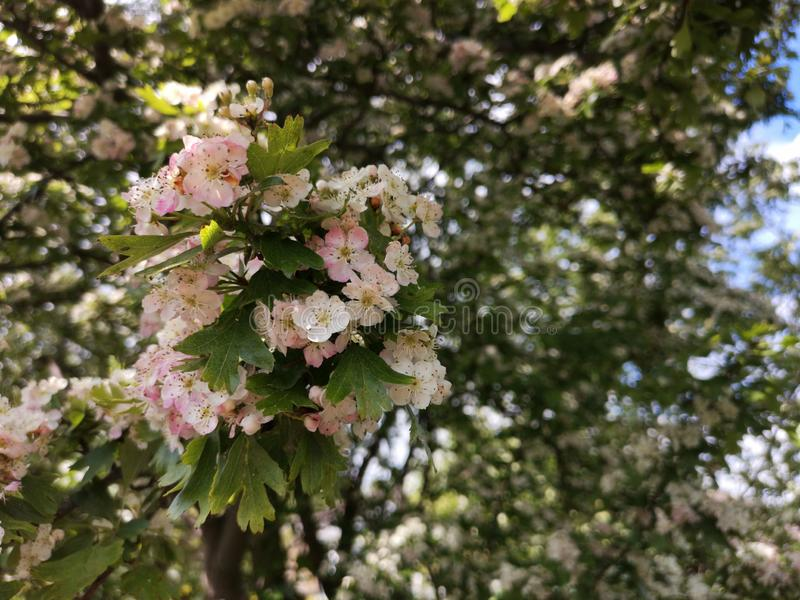 Blossomed trees. Flowers new life start spring stock photography