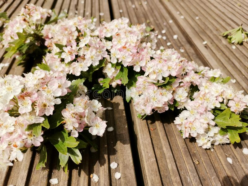 Blossomed trees. Flowers new life start spring royalty free stock photography
