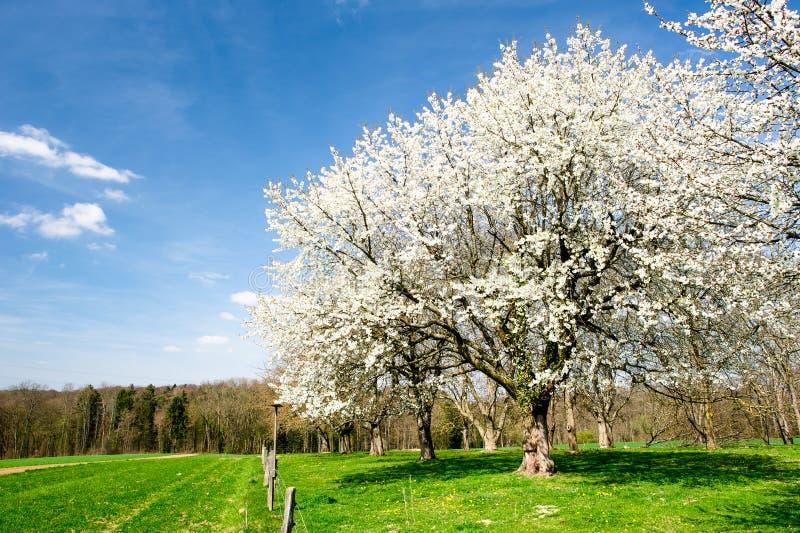 blossoming валы стоковые изображения rf