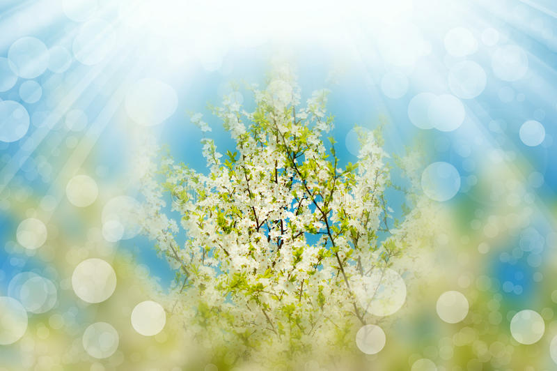 blossoming вал солнца ветвей светлый стоковые фото