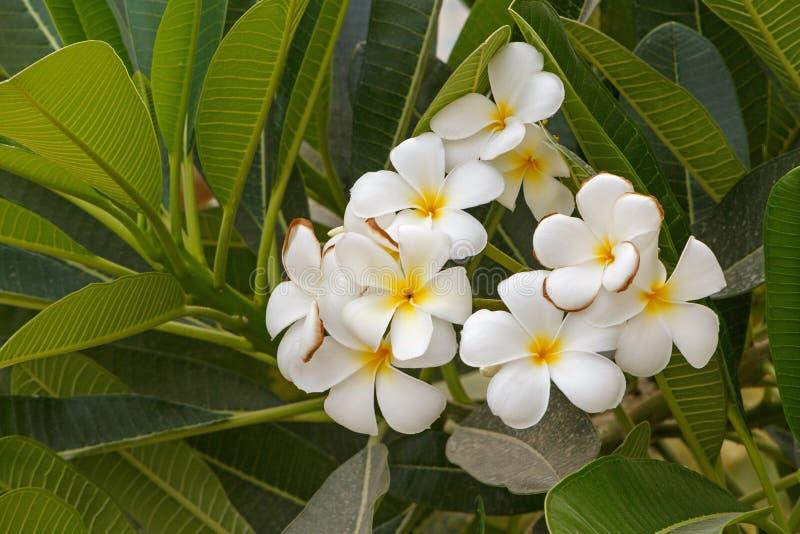 Blossoming пальмы стоковое фото