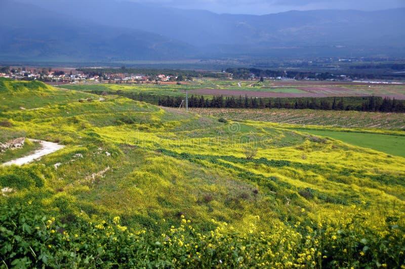 blossoming холмы стоковые фотографии rf