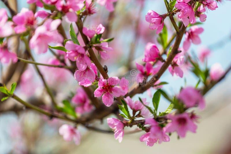 Дерево цветения стоковое изображение