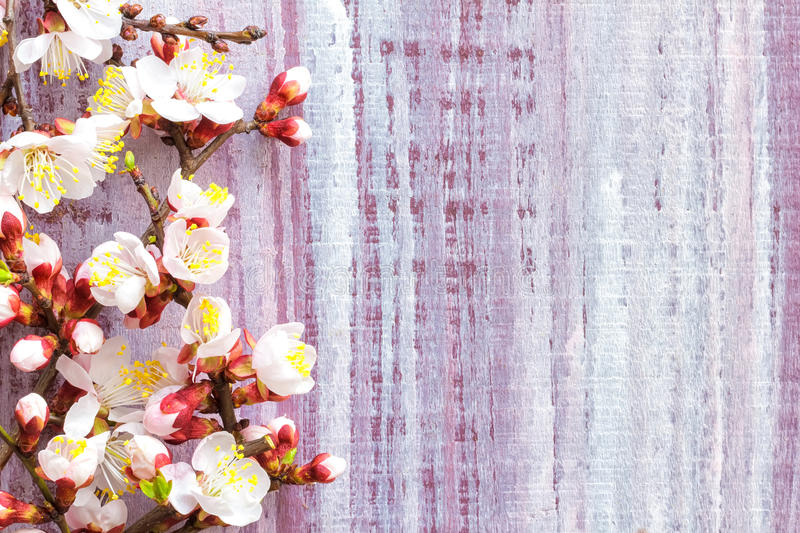 Download Blossoming branch stock image. Image of closeup, green - 38348849