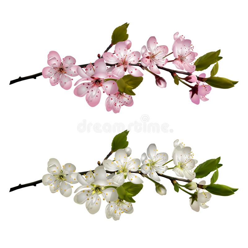 Set of Blossoming cherry branches royalty free illustration