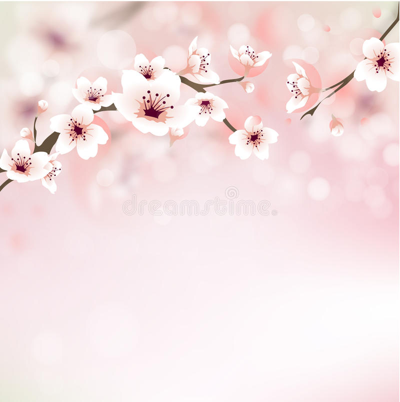 Free Blossoming Cherry Tree Stock Photography - 31197282