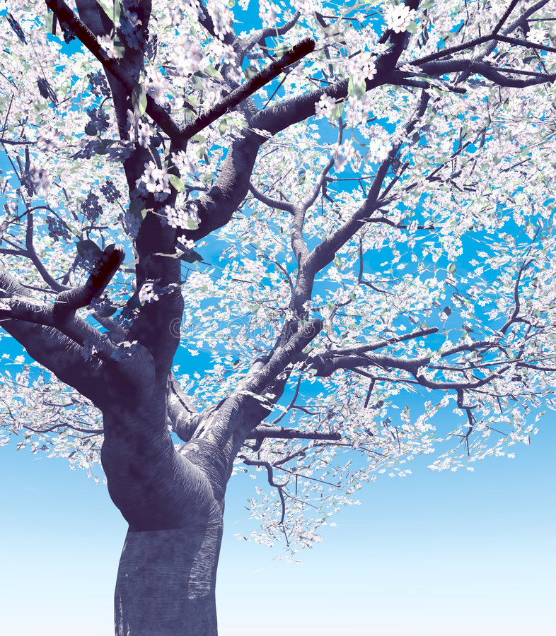 Download Blossoming Cherry-tree Stock Photography - Image: 5866172