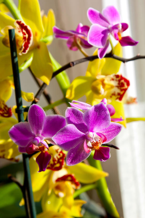Blossoming flower exotic orchid stock photo