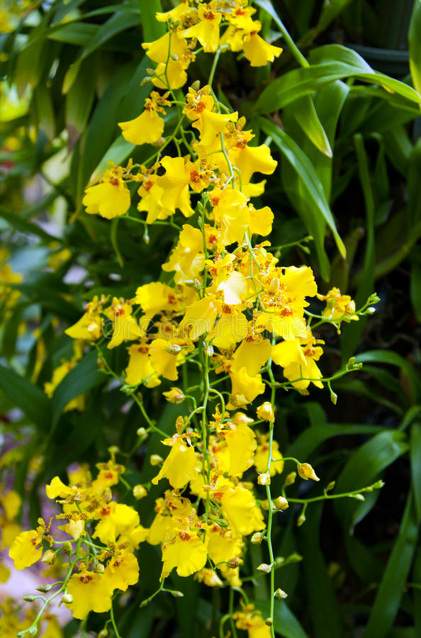 Blossoming flower orchid stock photos