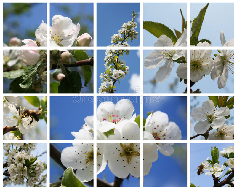 Blossoming fruiters stock photo