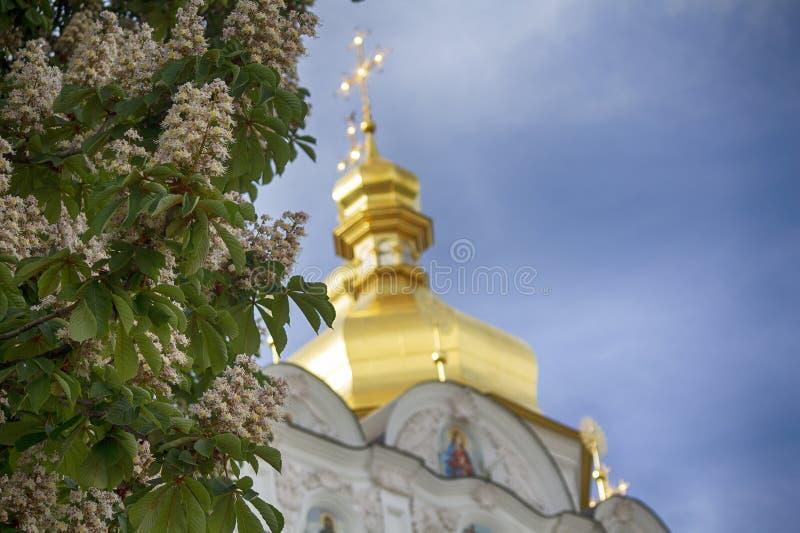 Blossoming kastanje op de achtergrond van de gouden domes van de kerk Kiev stock afbeeldingen