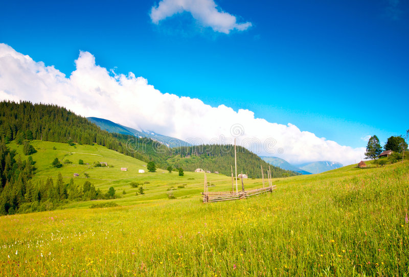 Download Blossoming meadow stock photo. Image of grass, mountainside - 9182188