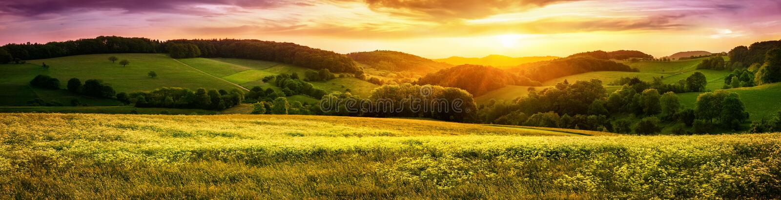 Blossoming meadow sunset panorama stock images