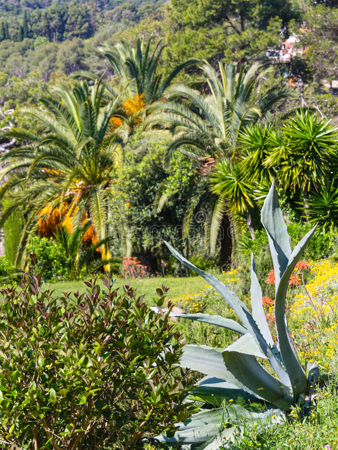 Blossoming palm tree and aloe plant stock photo image of scenery download blossoming palm tree and aloe plant stock photo image of scenery view mightylinksfo Gallery