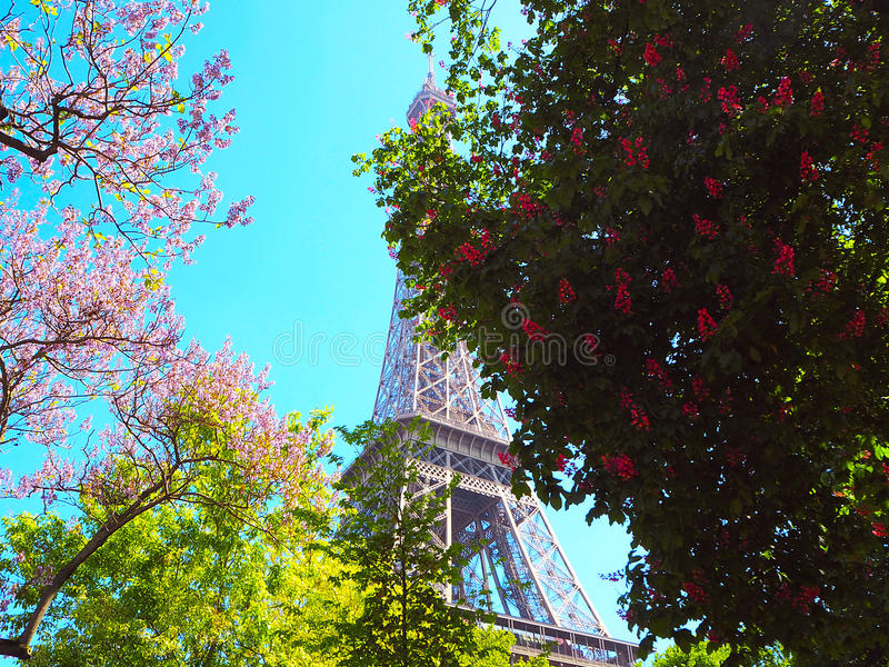 Blossoming pink chestnut tree magnolias pink flowering bushes and download blossoming pink chestnut tree magnolias pink flowering bushes and eiffel tower on background mightylinksfo Gallery