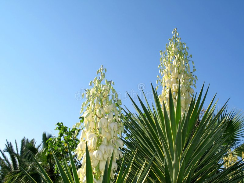 Blossoming plants royalty free stock photography