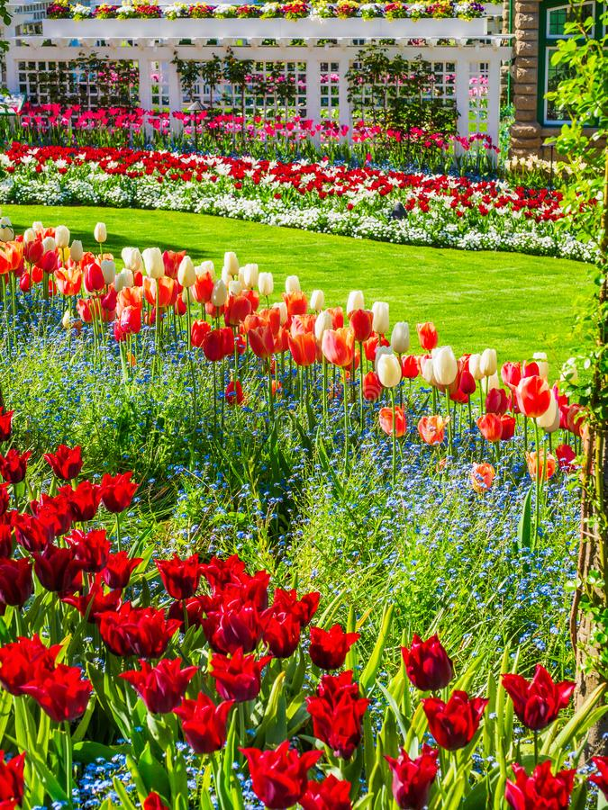 Spring park. Blossoming springtime flowers in the spring park, sunny day stock photos