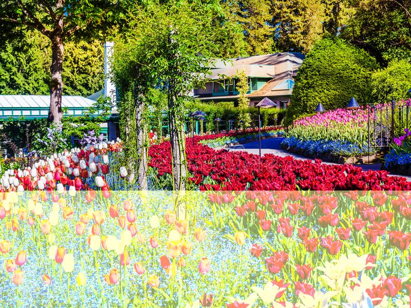 Spring park. Blossoming springtime flowers in the spring park, sunny day stock image