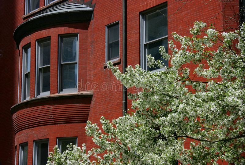 Blossoming tree and brick hous royalty free stock photo