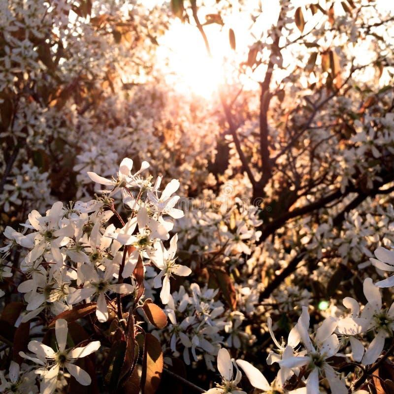Blossoming Tree Free Public Domain Cc0 Image